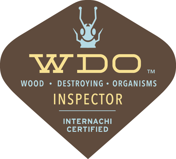 WDI wood destroying insect inspection - termite inspection Tacoma